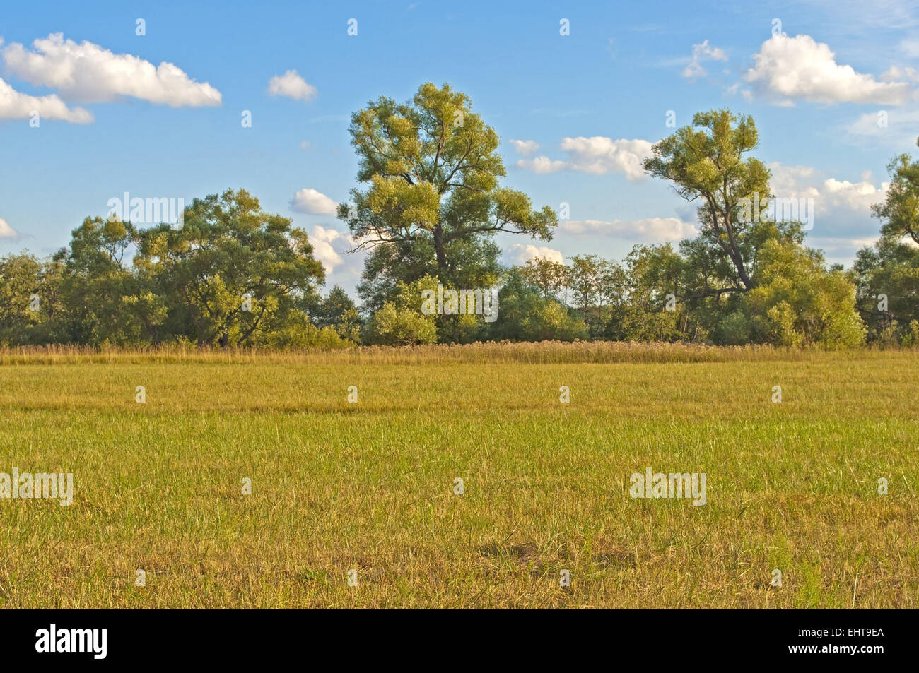 Schräge Feld im Herbst Stockbild