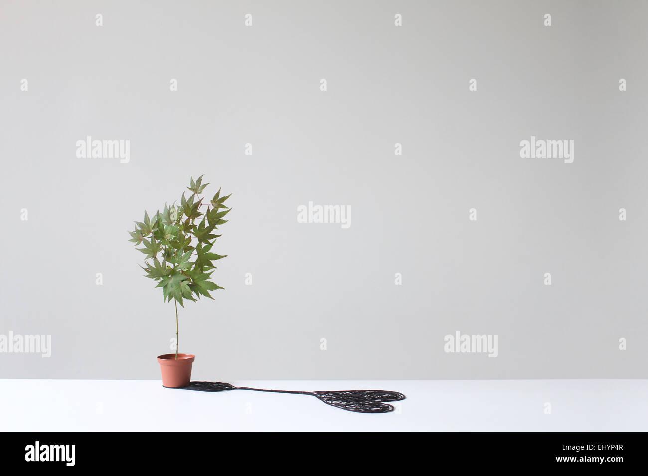 Baum in einem Topf wirft einen herzförmigen Schatten auf einem Tisch Stockbild