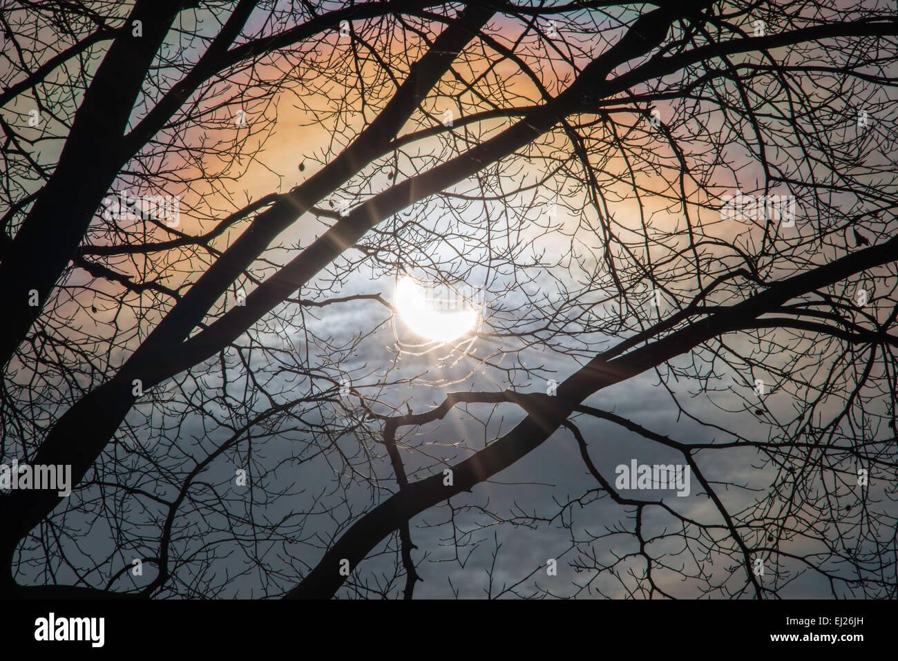 Sonnenfinsternis am 20.03.2015 vom Garten in Gloucestershire England UK durch Äste eines Baumes Blutbuche Sonne. Stockbild