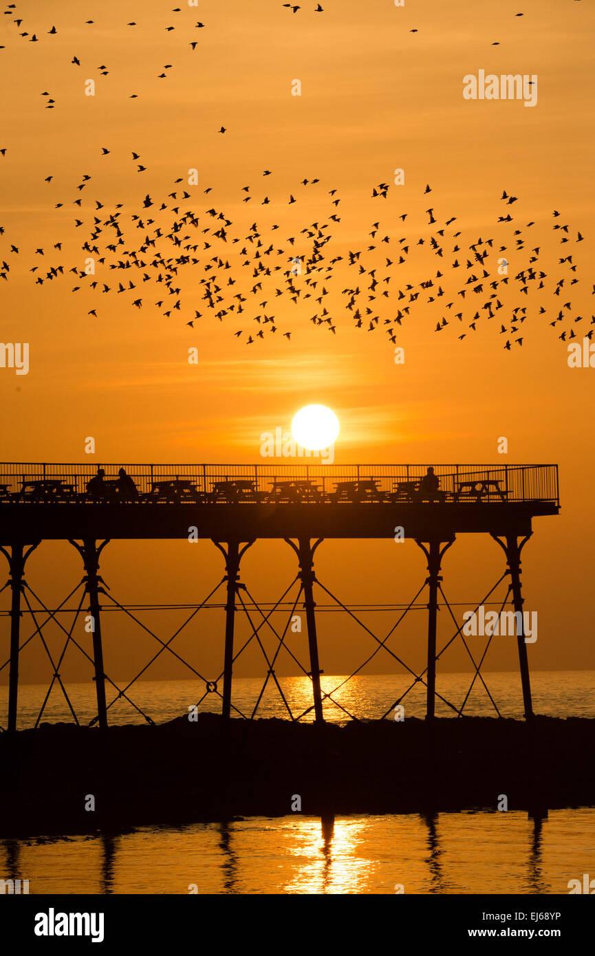 Aberystwyth, Wales, UK. 22. März 2015 UK Wetter: Tausende Stare fliegen in den Sonnenuntergang über Aberystwyth Stockbild
