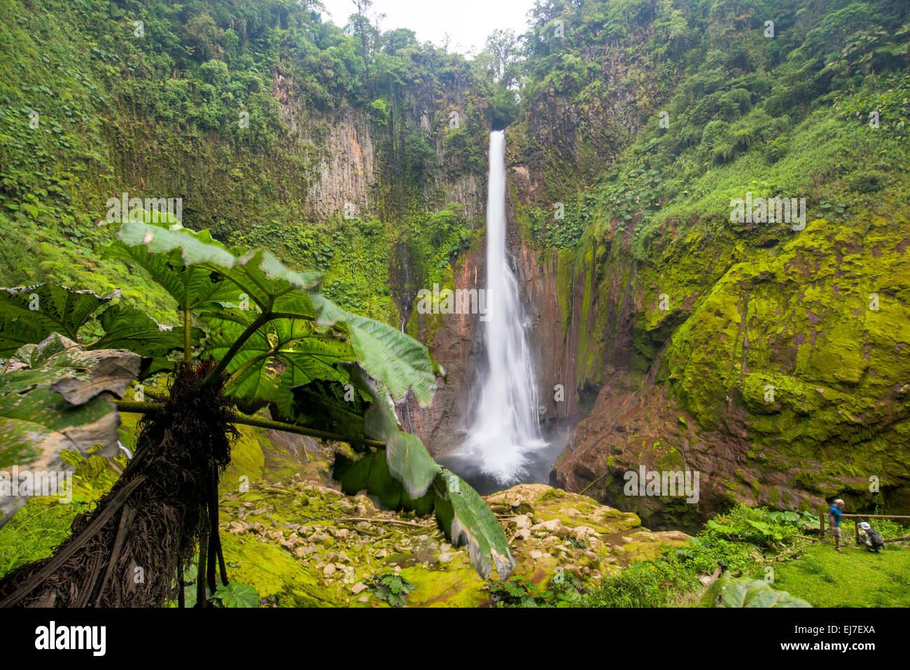 Costa Rica Toro Rio Cuarto de Grecia Costa Rica Nebelwald, Regenwald ...