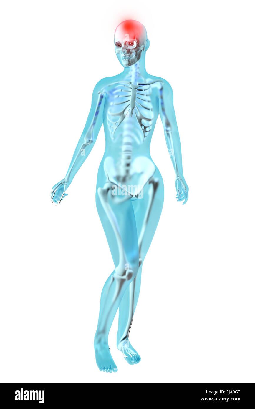 Großzügig Aortengabelung Anatomie Bilder - Anatomie Ideen - finotti.info