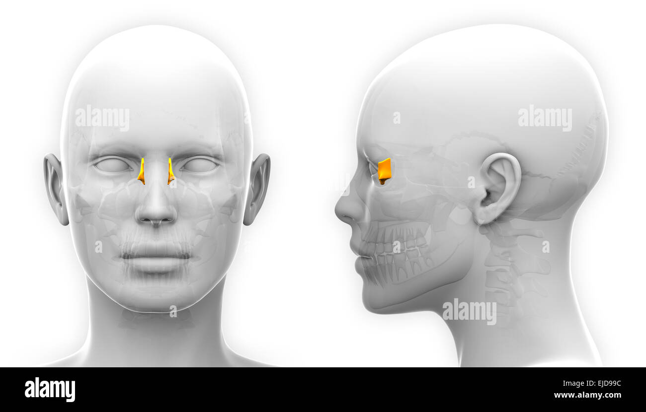 Lacrimal Stockfotos & Lacrimal Bilder - Alamy