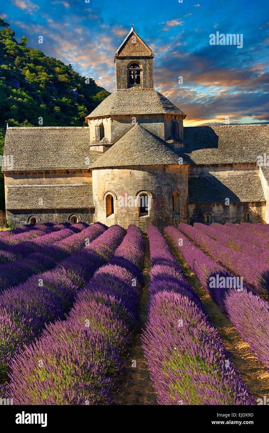 Die 12. Jahrhundert Romanesque Zisterzienser Abtei Notre-Dame von Senanque, in blühenden Lavendel Felder der Stockbild