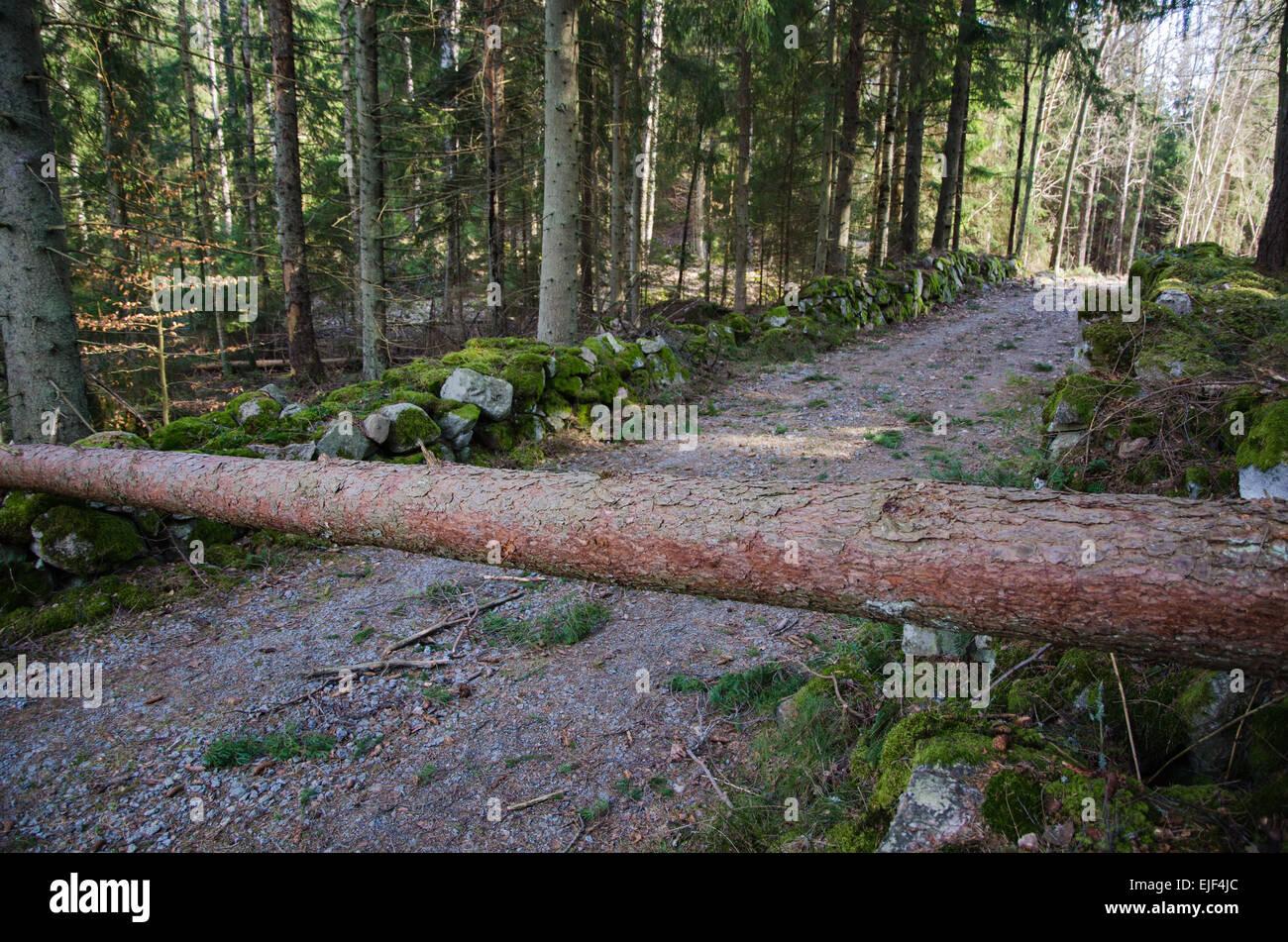 Hindernis in Form einer gefallenen Kiefer über einen Feldweg in den Wald. Aus der Provinz Småland in Schweden. Stockbild