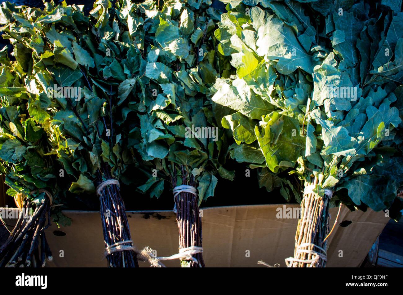 Eiche und Birke Blätter organisch in der russischen Sauna, Clense die Haut verwendet werden Stockbild