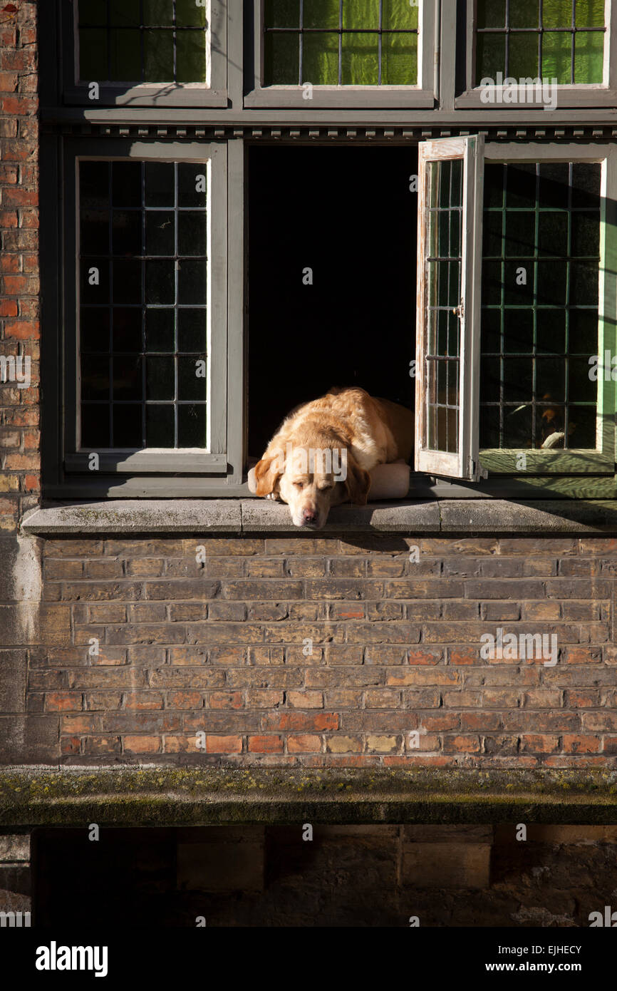 hund im fenster im haus am kanal in br gge belgien stockfoto bild 80289803 alamy. Black Bedroom Furniture Sets. Home Design Ideas