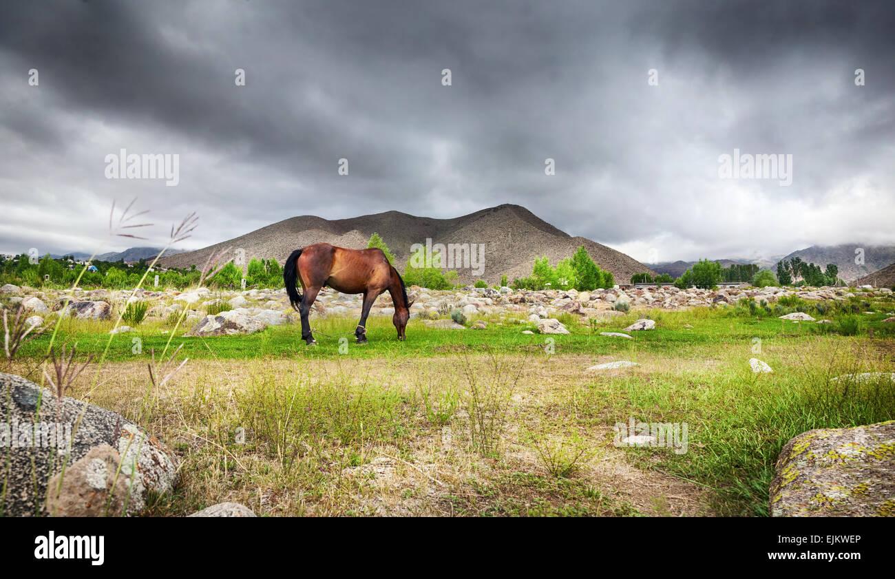 Pferd in den Bergen am dramatischen bedecktem Himmel in Zentralasien Stockbild