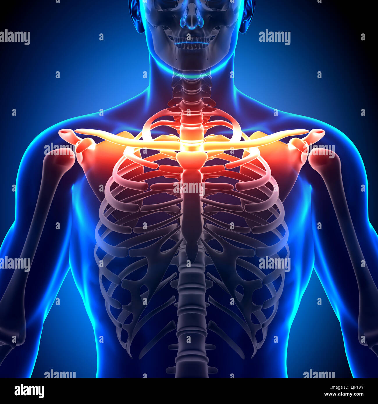 Chest Bones Stockfotos & Chest Bones Bilder - Alamy