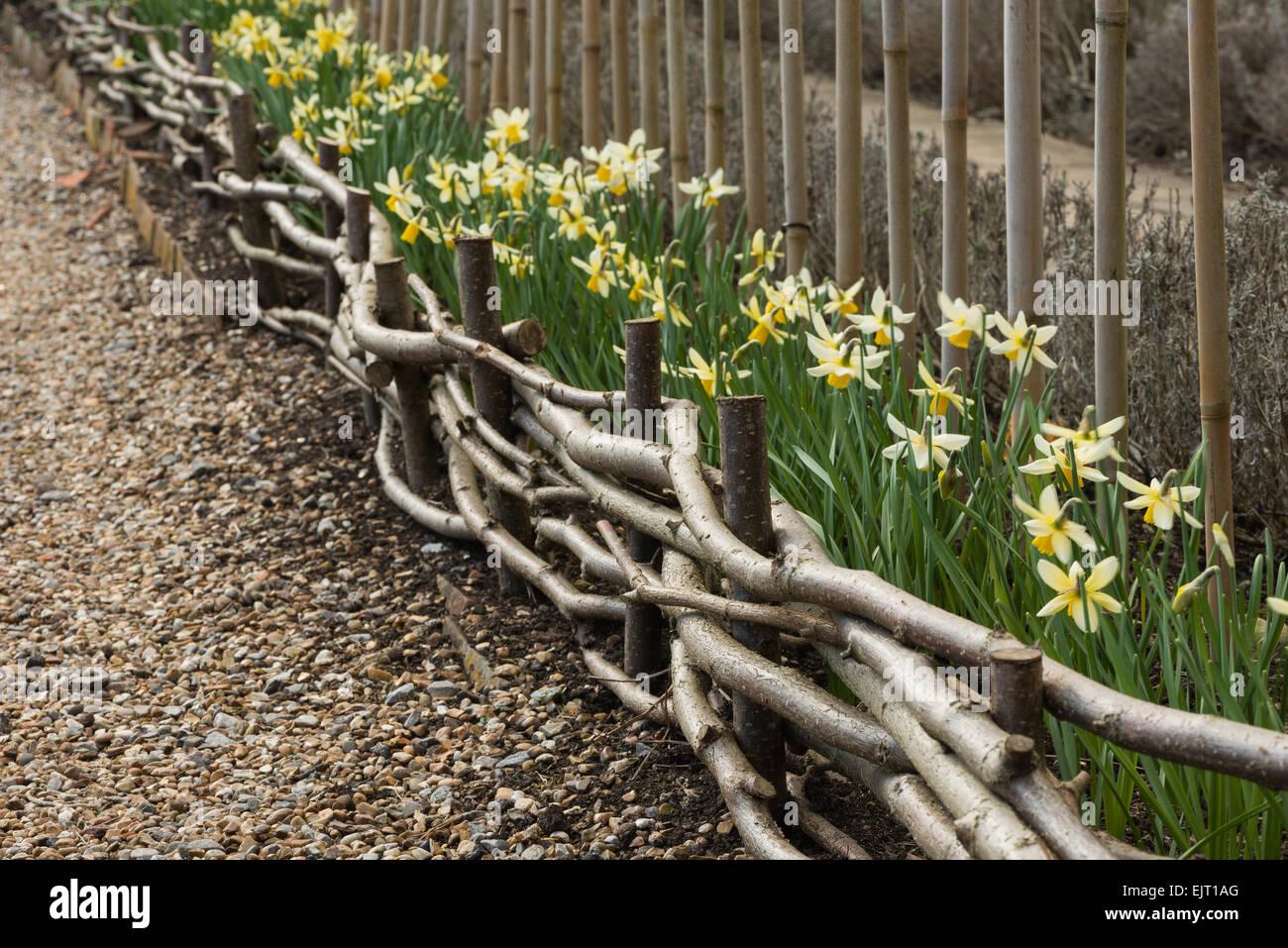 Nutzung Der Verfing Haselnuss Filialen Gewundenen Kleinen Zaun