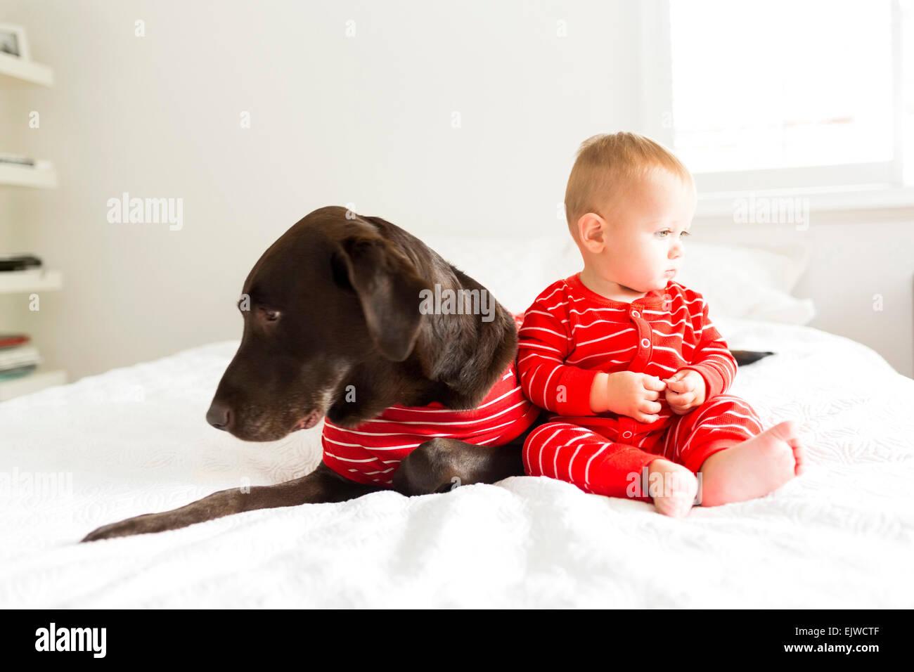 Junge (2-3) mit Hund im Schlafzimmer Stockfoto, Bild ...