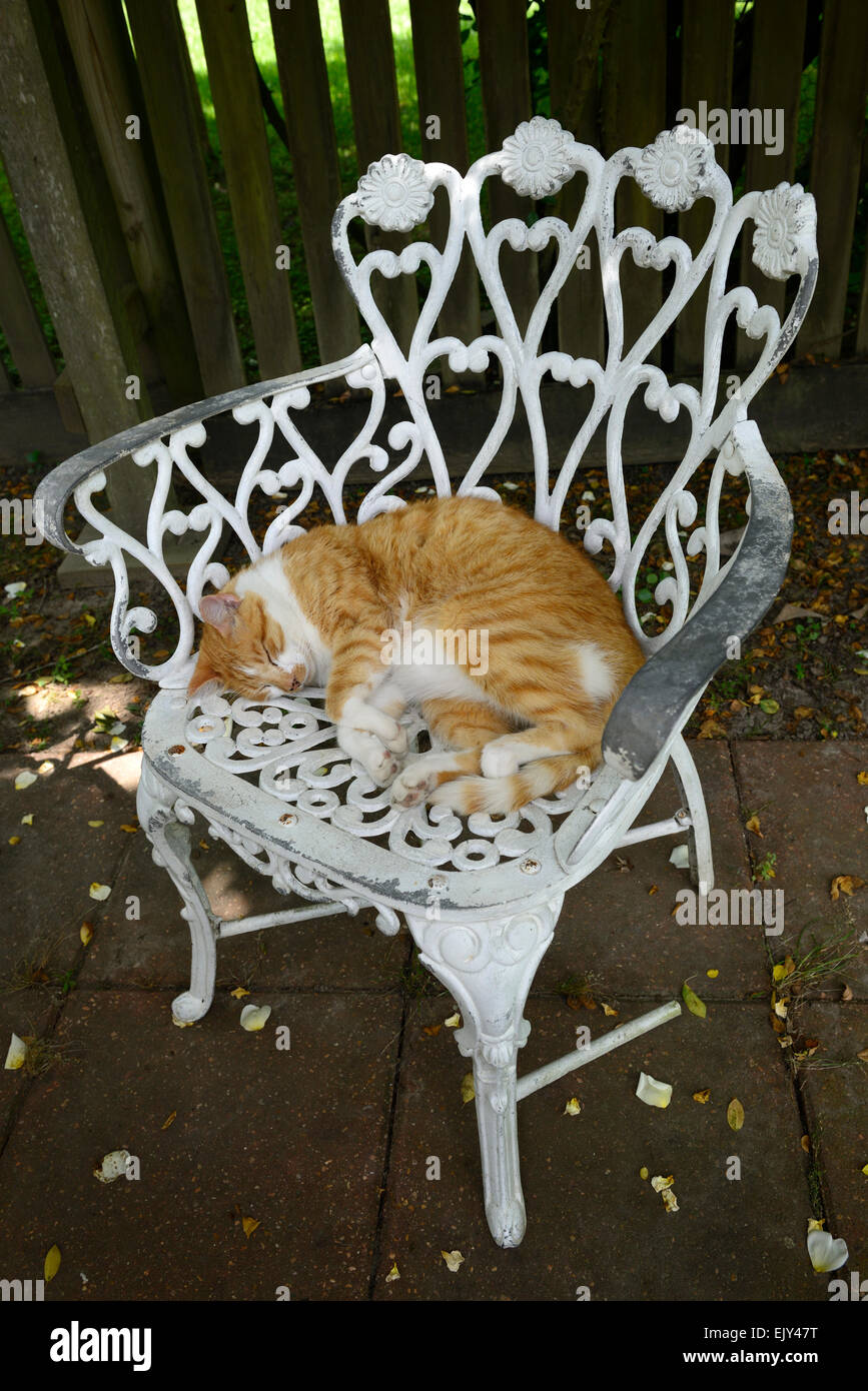 Ginger White Cat Asleep Stockfotos Ginger White Cat Asleep Bilder