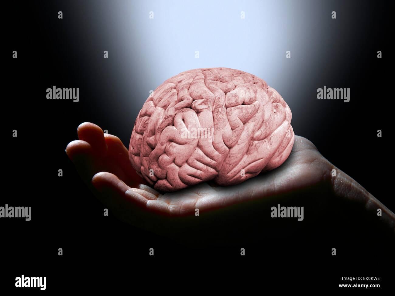 Brain Hand Stockfotos & Brain Hand Bilder - Alamy