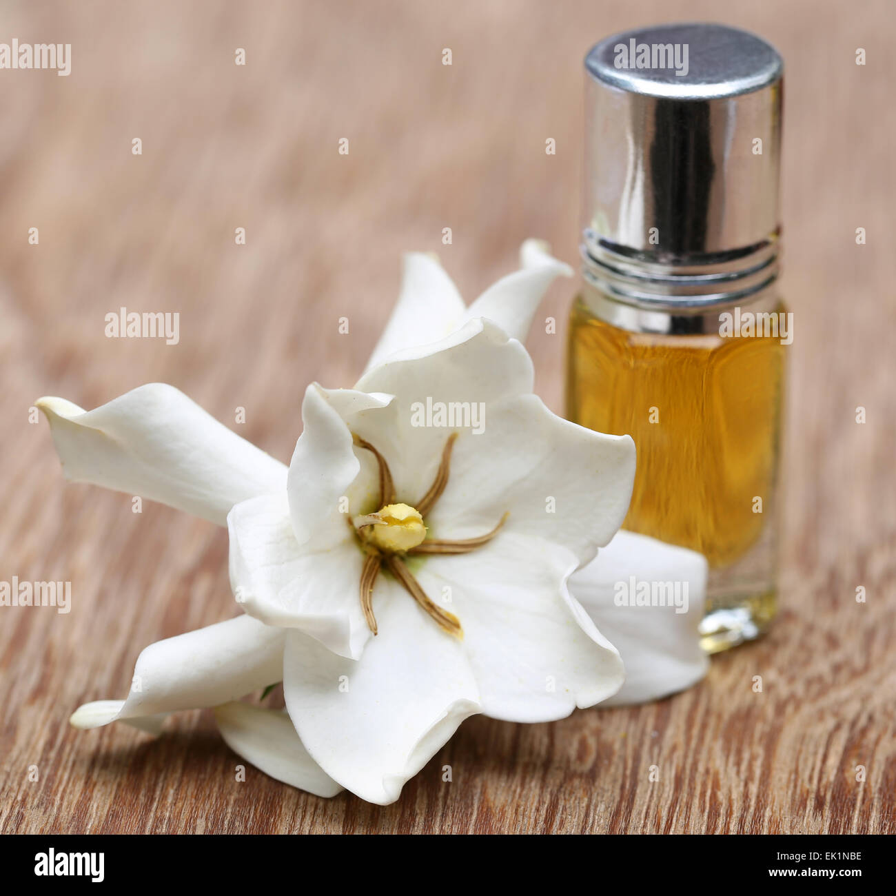 Gardenia oder Gondhoraj Blume mit Essenz Flasche auf Holzuntergrund Stockbild