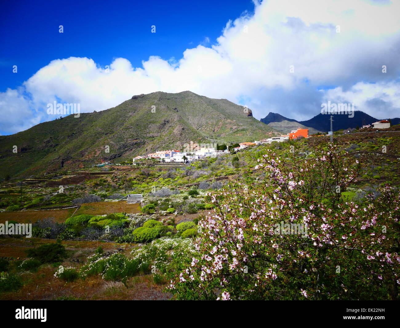 Cherry Blossom-Landschaft bei Santiago del Teide Teneriffa Insel Kanaren Spanien Stockbild