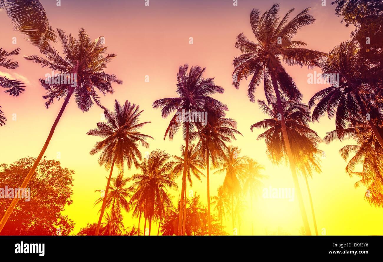Goldener Sonnenuntergang, Natur-Hintergrund mit Palmen. Stockbild