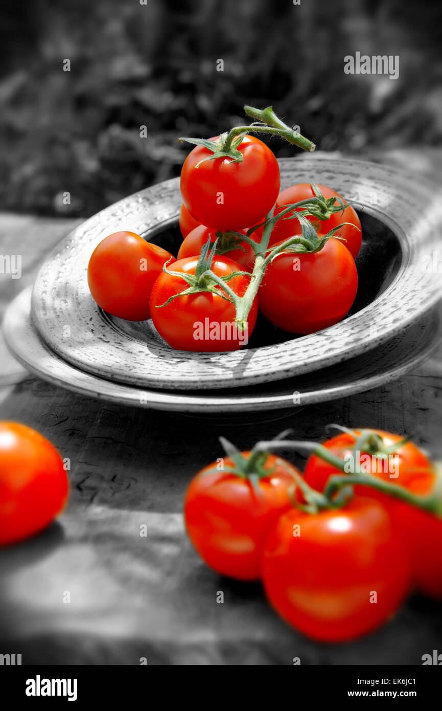 ganz frische rote Tomaten auf Reben abgeholt Stockbild