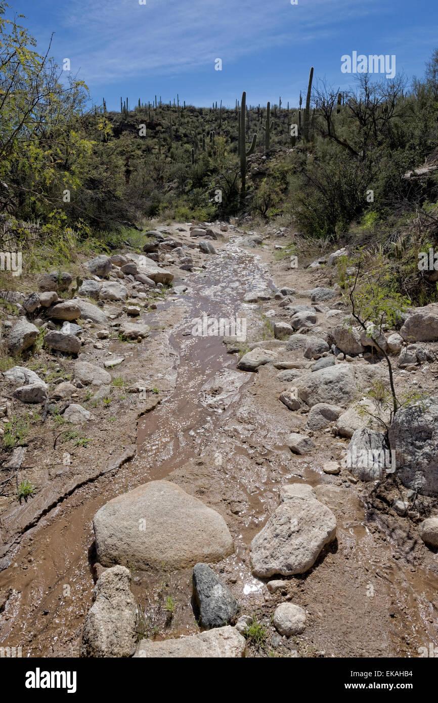 Wasser in der Wüste, Sabino Canyon, Arizona Stockbild
