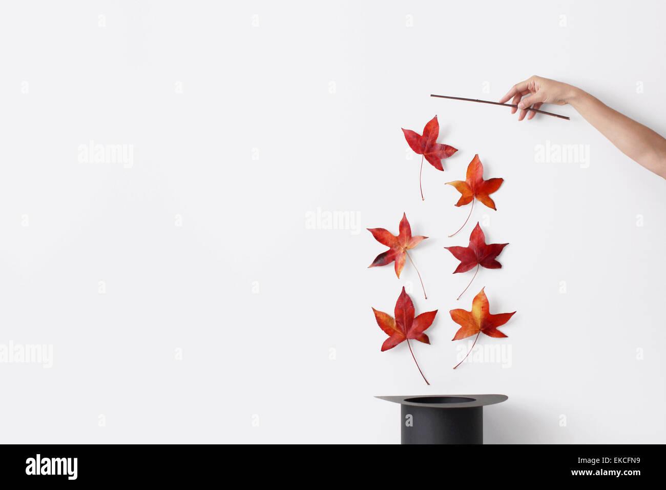 Zarte Frauenhand hält einen Zauberstab ziehende Herbst Blätter aus dem Hut Stockbild