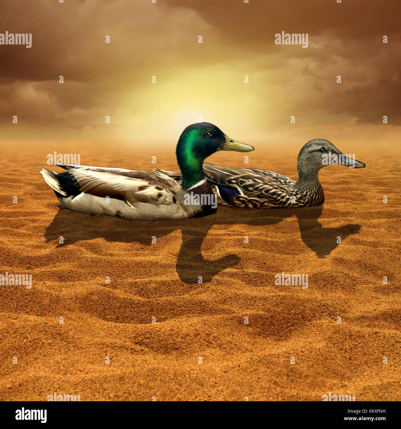 Klimawandel und begrenzte Gelegenheit Konzept als ein paar Enten in der Mitte eine trockene heiße Wüste Stockbild