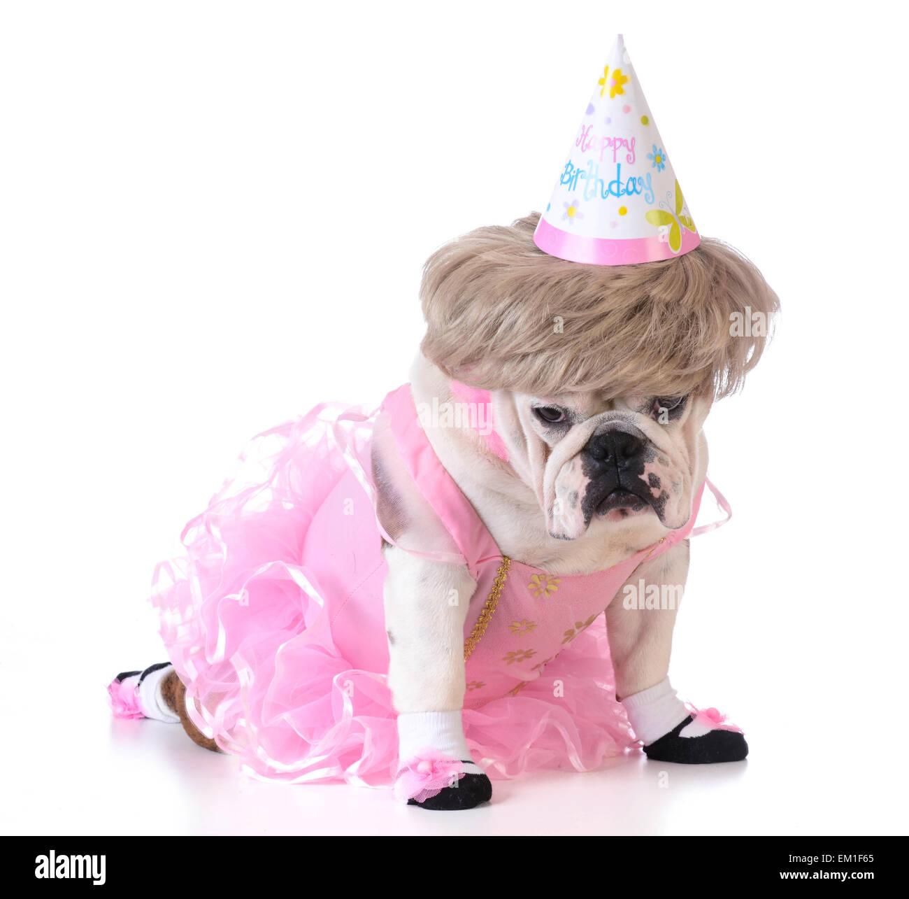 Geburtstag Hund Weibliche Bulldogge Ballerina Kostum Und