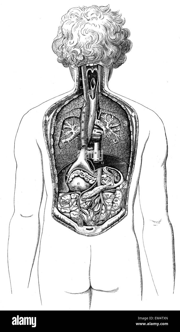 Großzügig Anatomie Eines Mordes Galerie - Anatomie Ideen - finotti.info