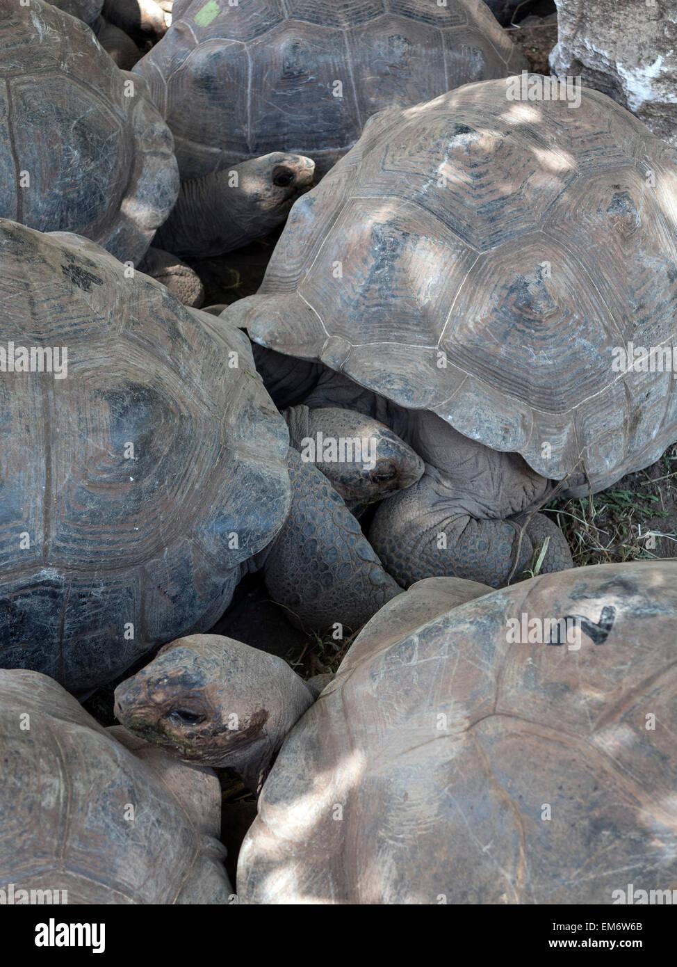 Ile Rodrigues Schildkrötenfarm Geantes Parc François Leguat Mauritius Ocean Indien Stockbild
