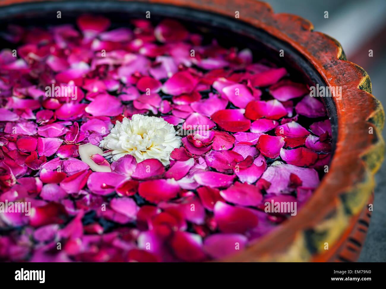 Weiße Blüte mit roten Rosenblättern in der Schüssel im Wellness-Salon Stockbild