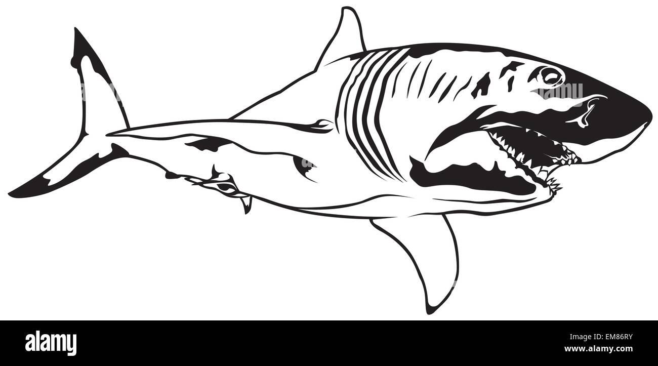 Ziemlich Anatomie Eines Großen Weißen Hai Bilder - Menschliche ...