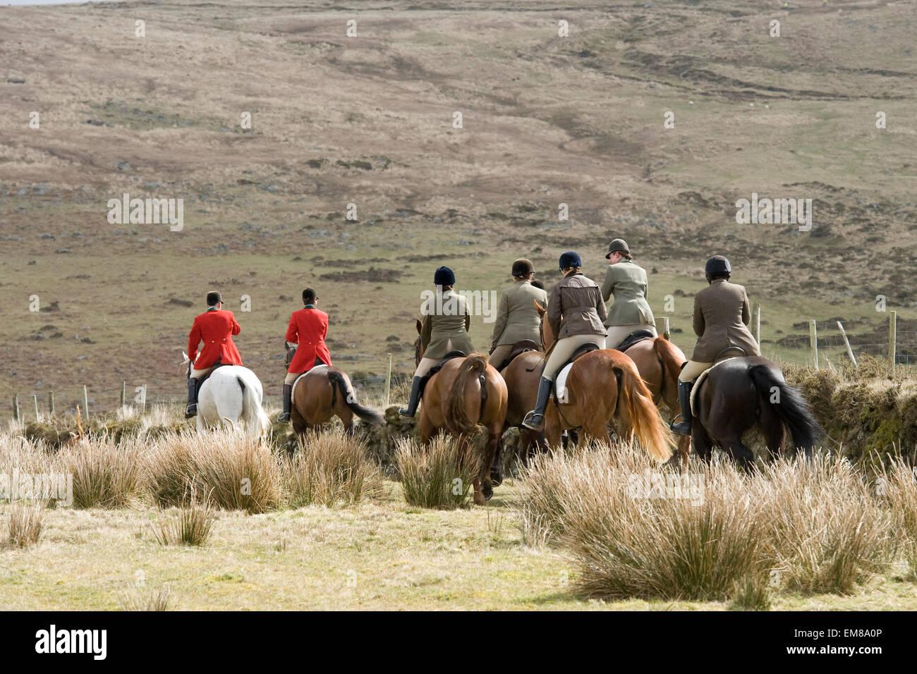 Jagd auf Dartmoor, devon Stockbild