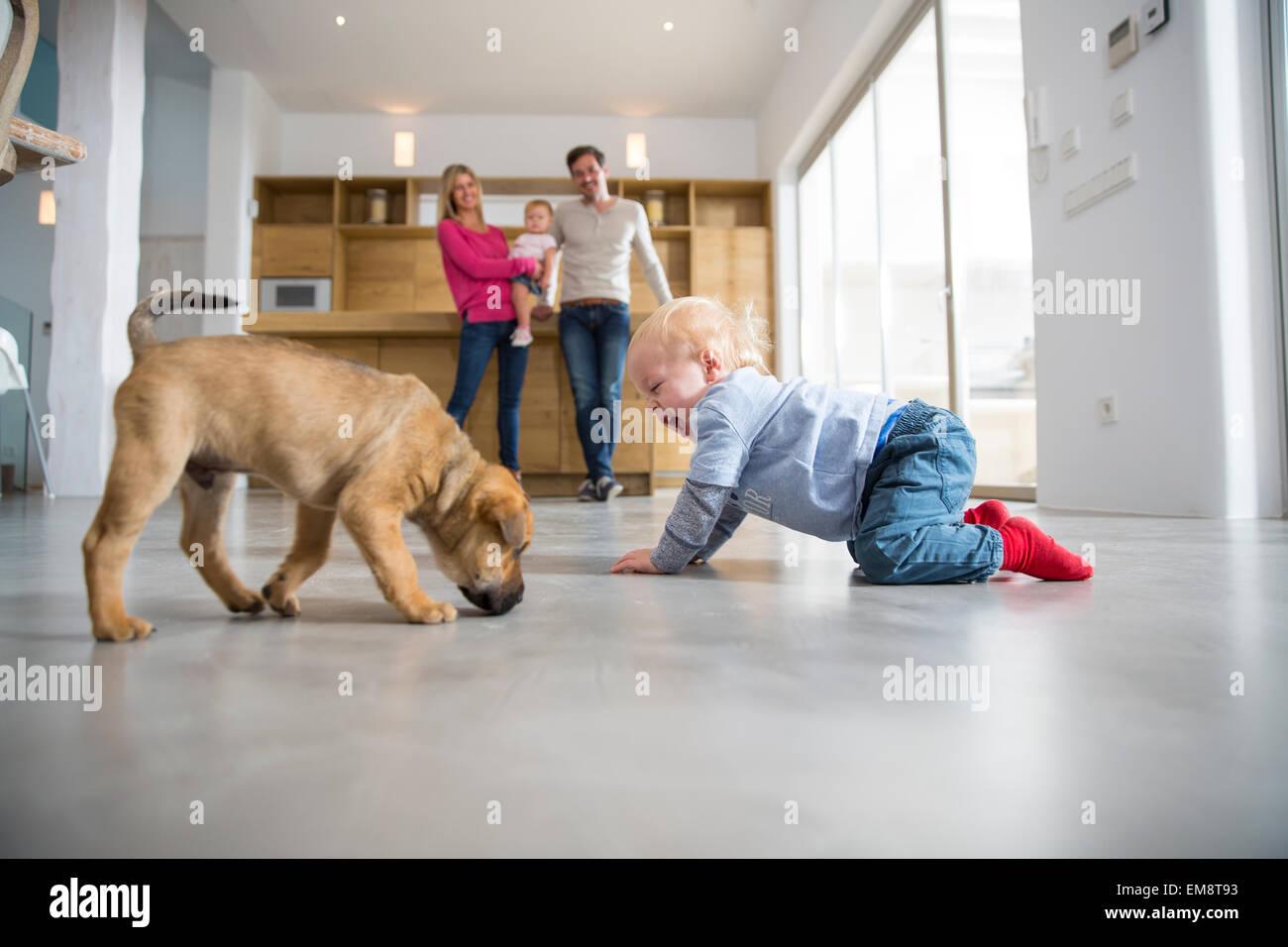 Männliche Kleinkind Erdgeschoss Speisesaal mit Welpen spielen Stockbild