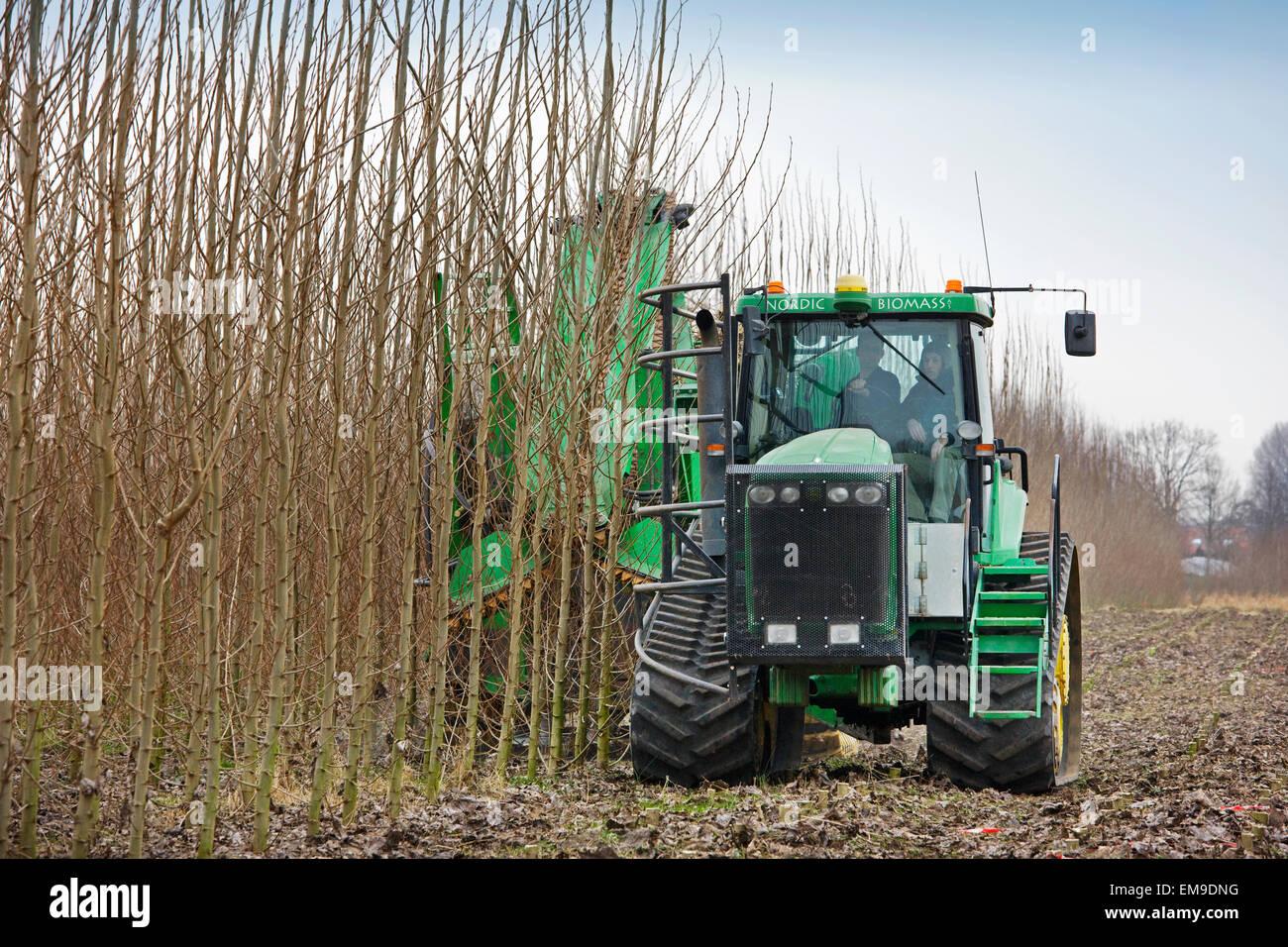 Schnelle Drehung Forstwirtschaft / SRF, Single-Pass-Schnitt-Chip Mähdrescher ernten von schnell wachsenden Stockbild
