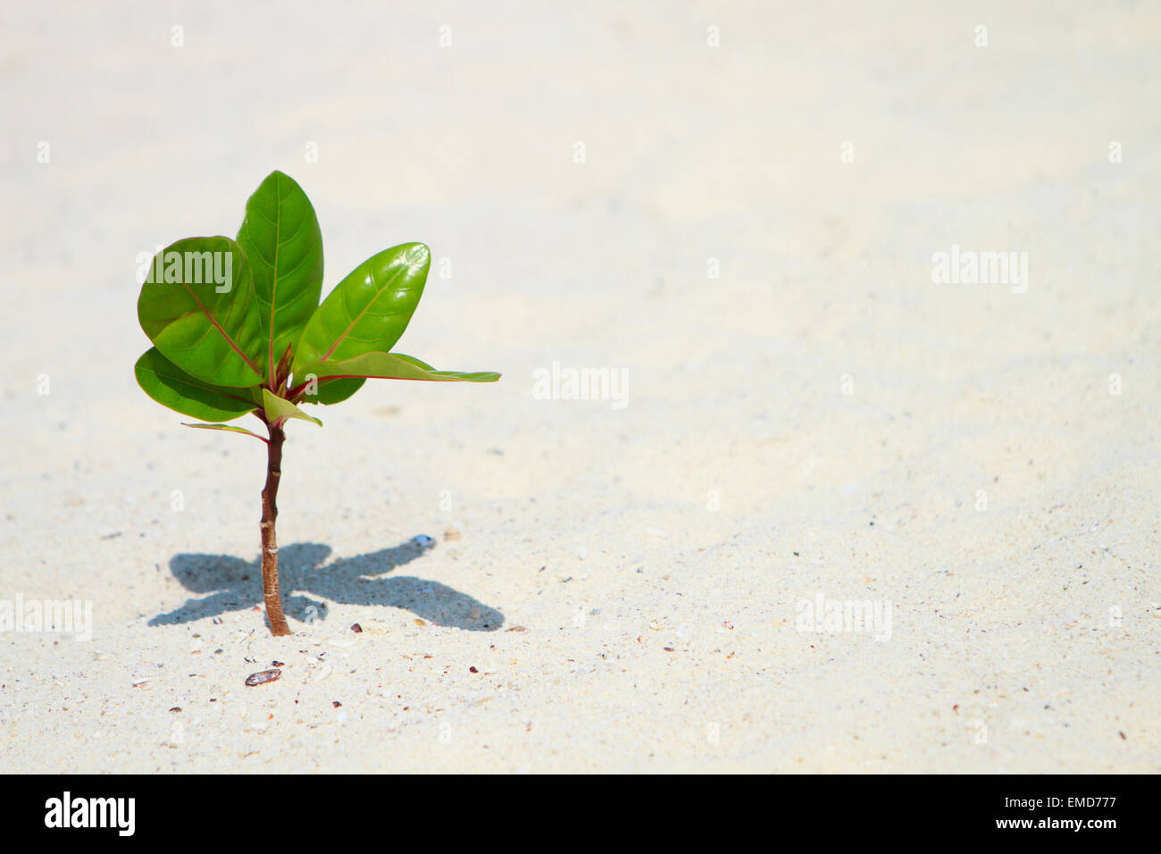Junge Pflanze wächst am Strand Stockbild
