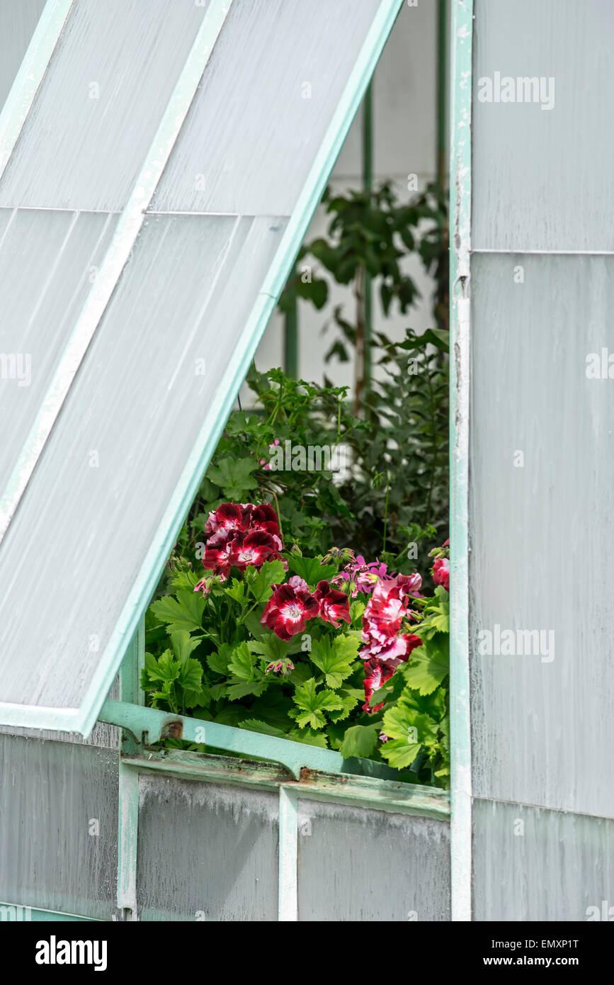 Rote Blumen Gesehen Durch Geoffnete Ventil Fur Luftung Im