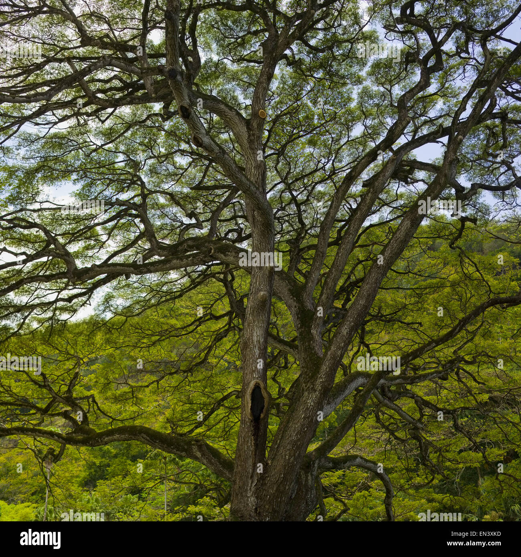 Detailansicht des Baumes Stockbild