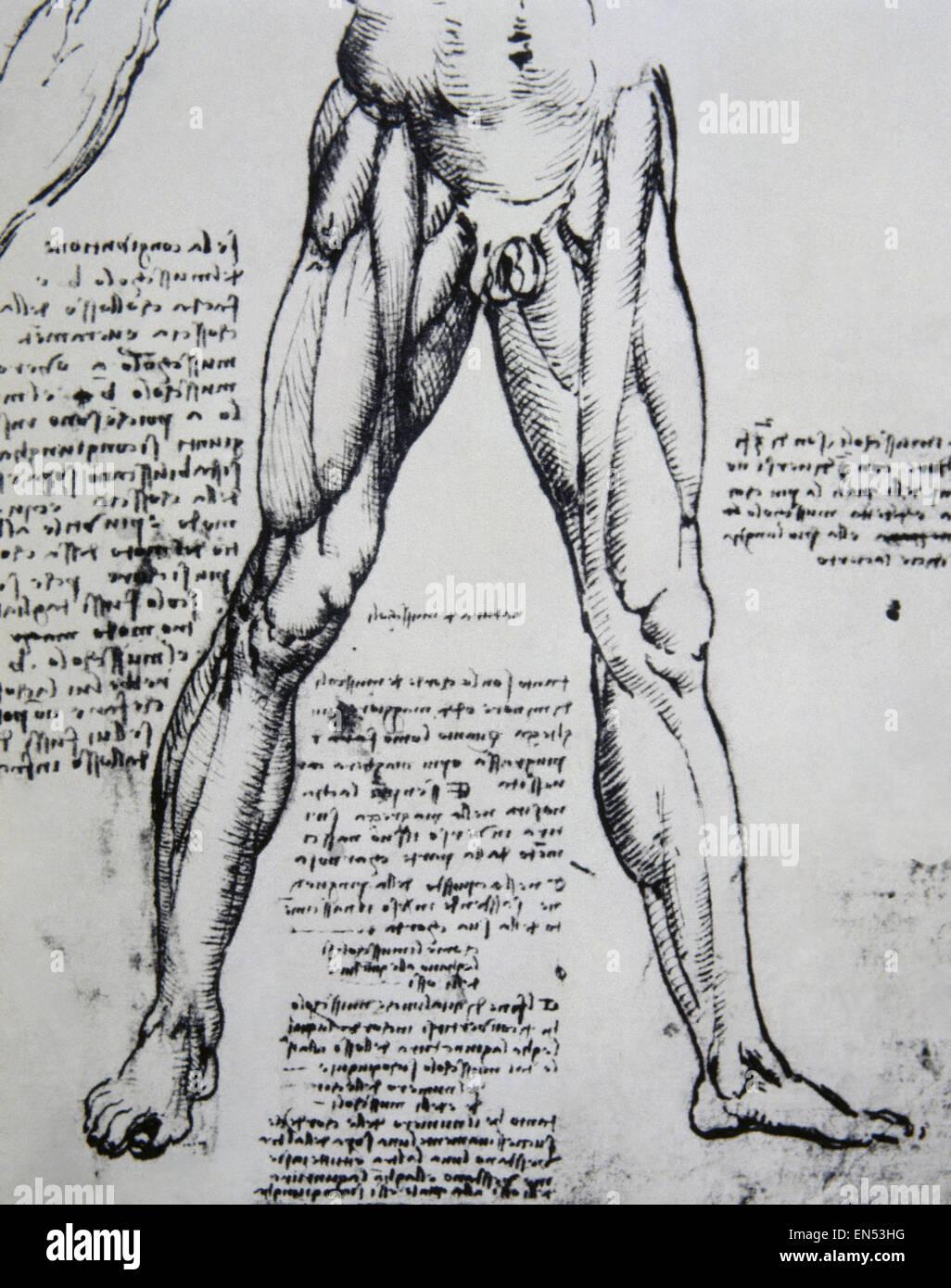Fantastisch Leonardo Da Vinci Anatomie Skizzen Ideen - Menschliche ...