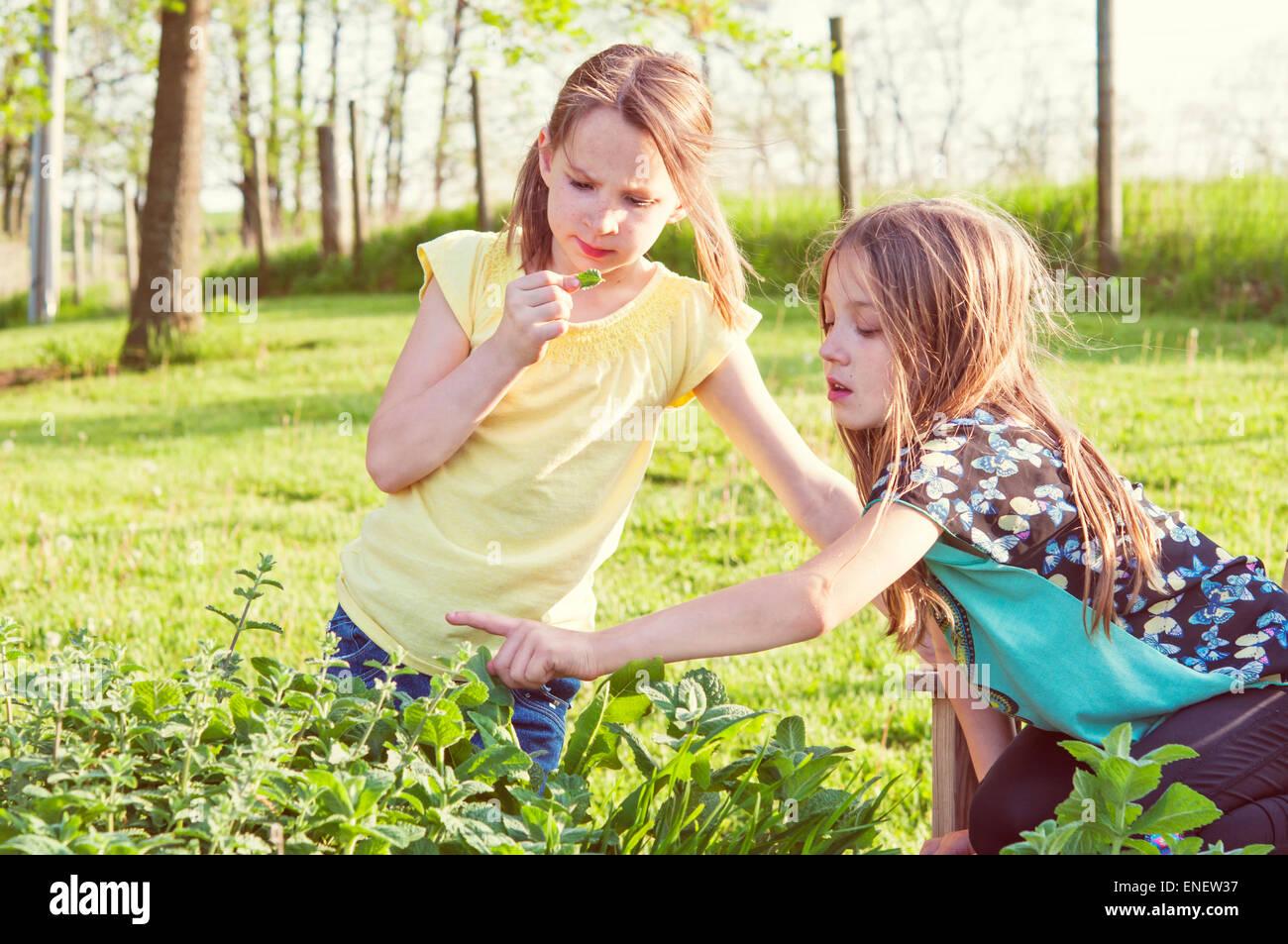 Mädchen im Kräutergarten Stockfoto