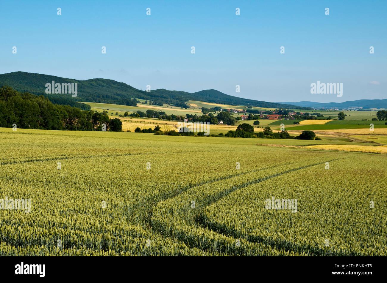 Landschaft mit Feldern und Hügeln, Weserbergland, Niedersachsen, Deutschland Stockbild
