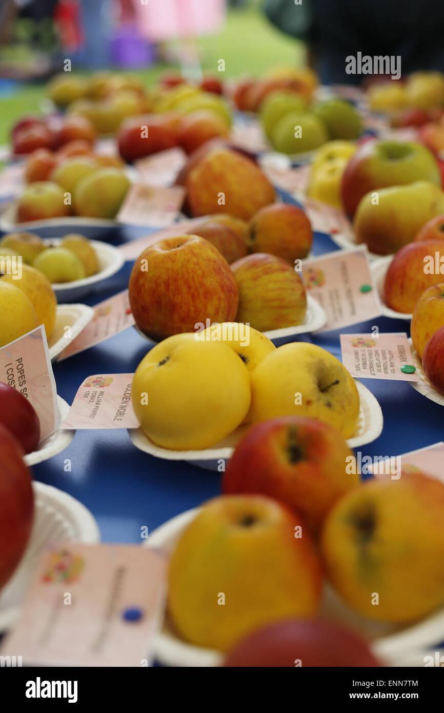 Apple-Früchte in verschiedenen Farben und Größen auf Pappteller auf ...