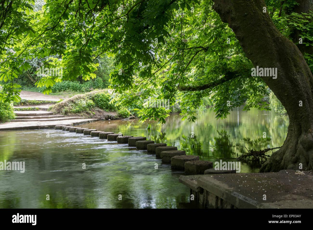 Trittsteine über River Mole, Surrey, England Stockbild