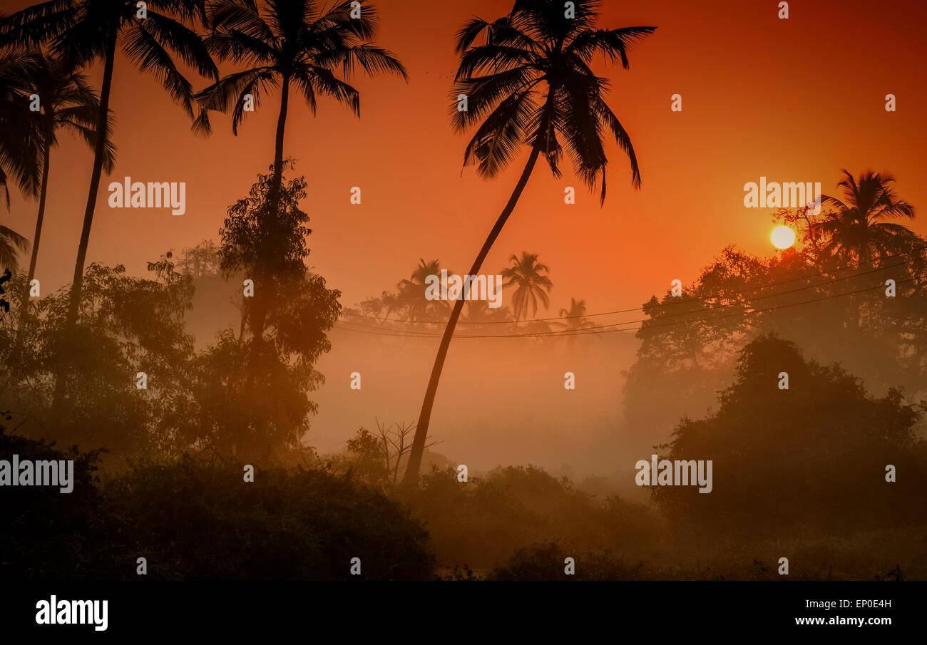 Palmen, die Silhouette gegen einen nebligen Sonnenaufgang im Dorf Tamborim, Goa, Indien Stockbild