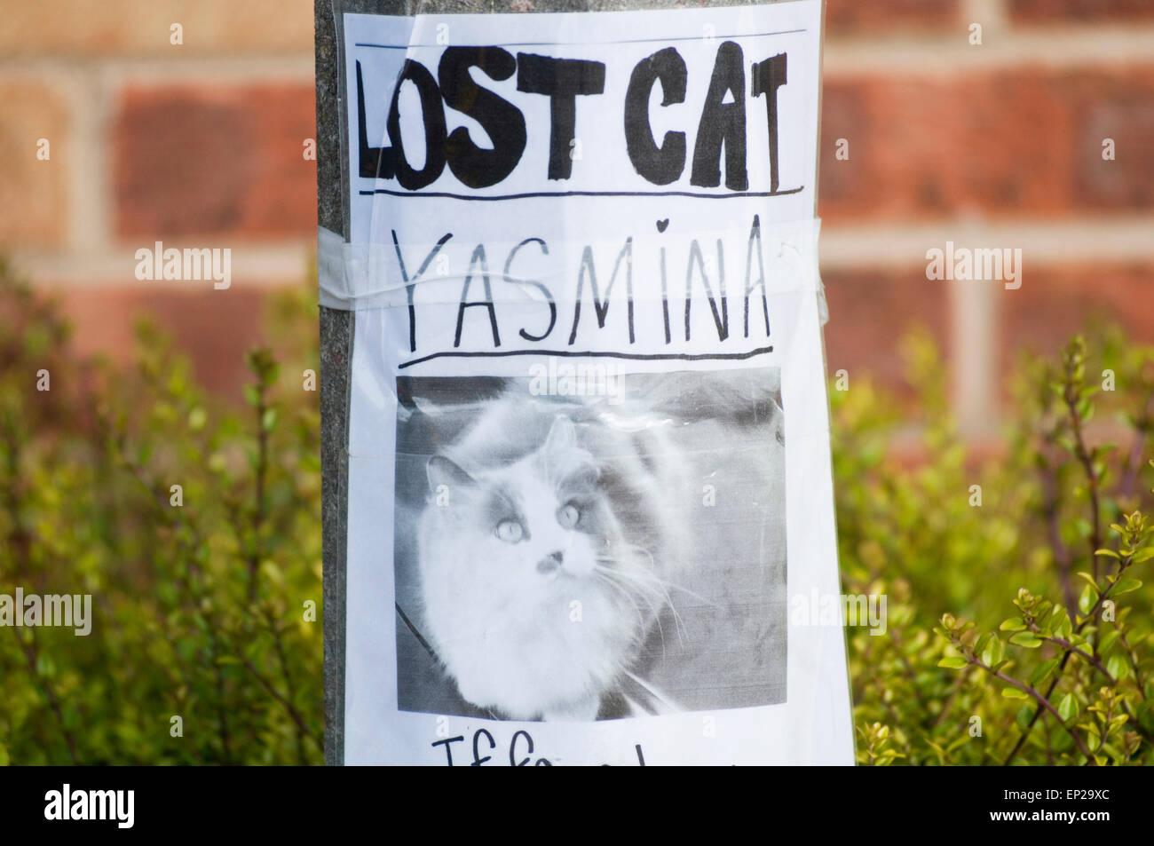 verlorene Katze Katzen Haustier Haustiere Zeichen beachten Sie, dass fehlende verschwunden Stockbild