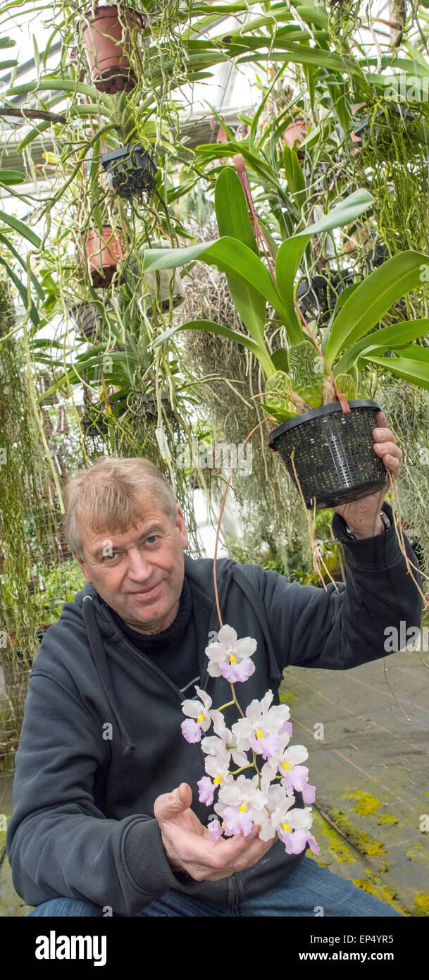 Orchideen Wlodarczyk