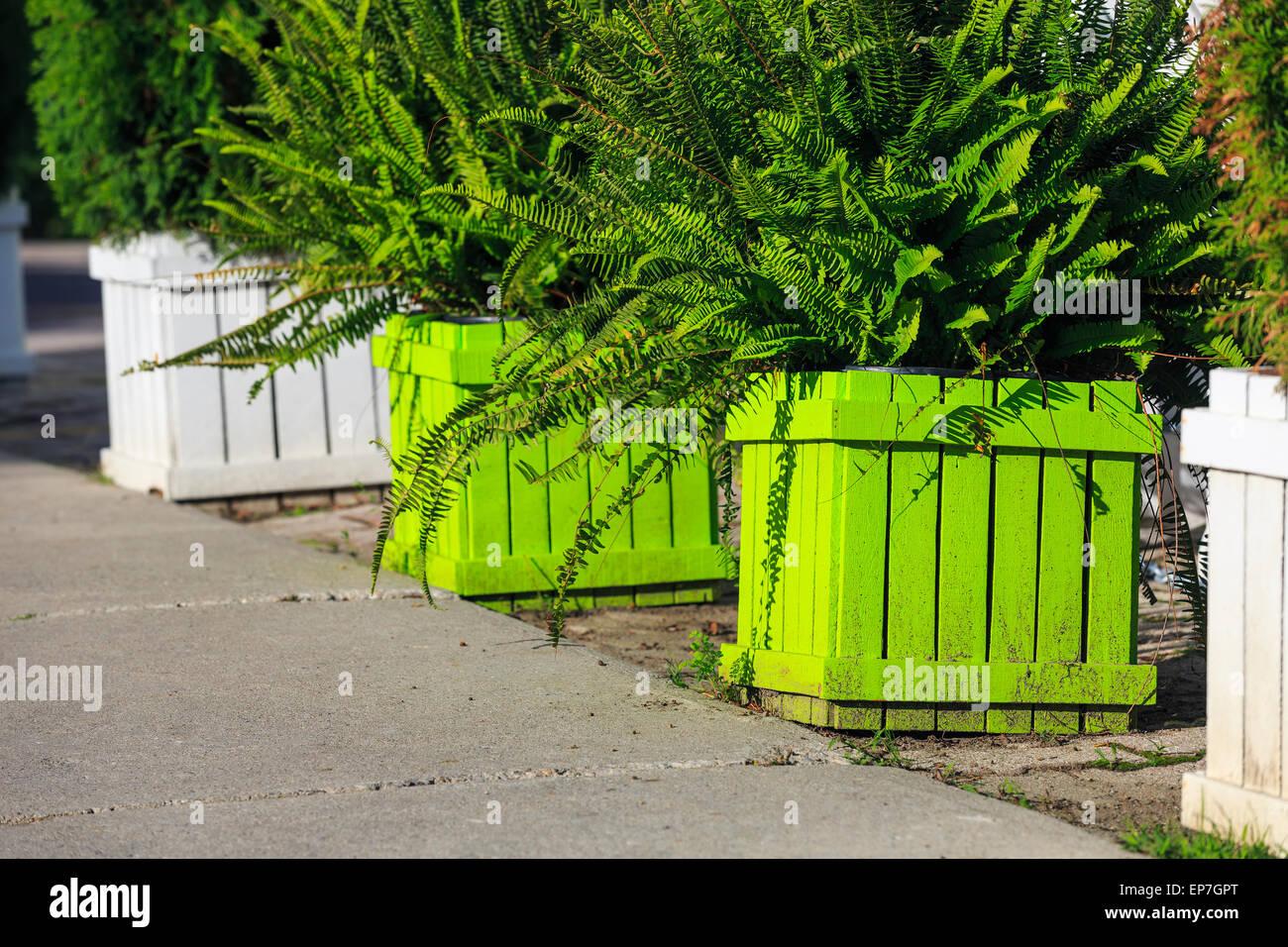 Hölzerne Blumenkästen mit Farnen auf einem Bürgersteig. Stockbild