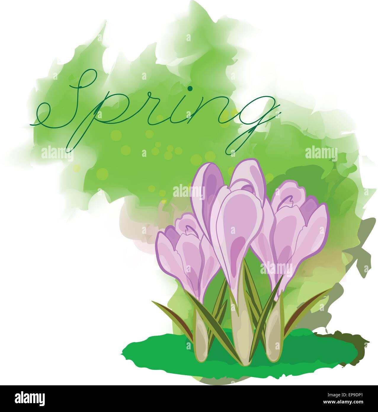 Frühling Blumen Krokus Grußkarte Für März 8 Poster Mit Blühenden