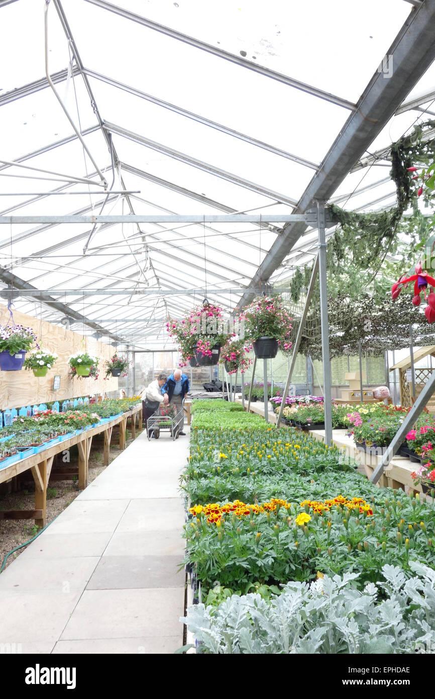 Älteres paar kaufen Pflanzen auf ein indoor-Garten-center Stockfoto ...