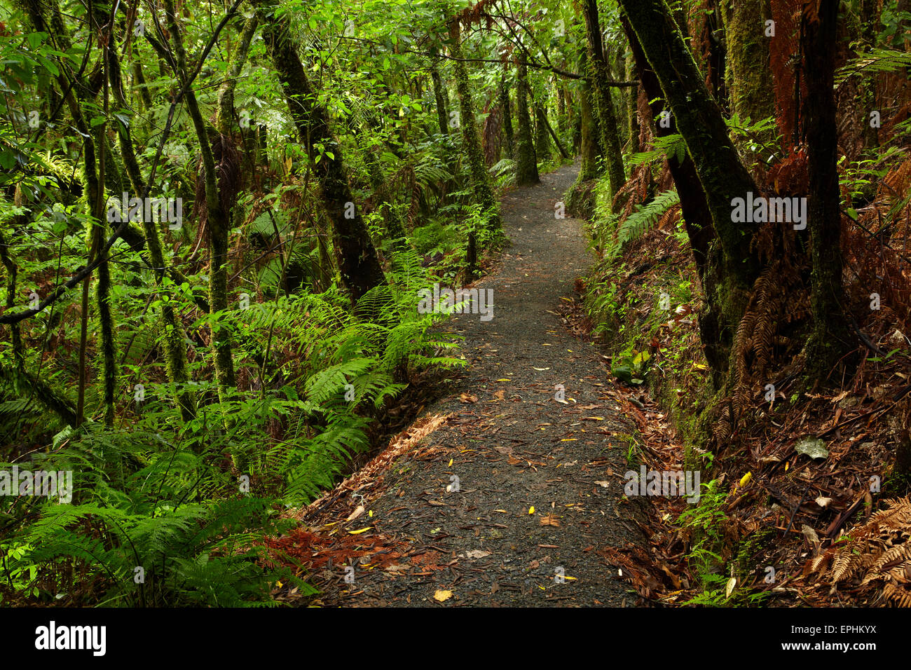 Hunua Falls Loop Track, Hunua Ranges, Auckland, Nordinsel, Neuseeland Stockbild