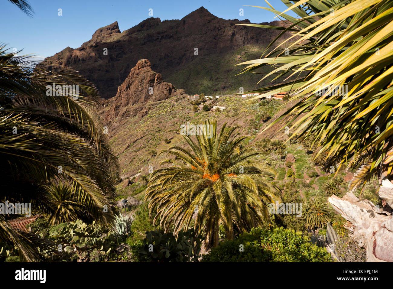 Masca Schlucht und Dorf, Teno-Gebirge, Teneriffa, Kanarische Inseln, Spanien, Europa Stockbild