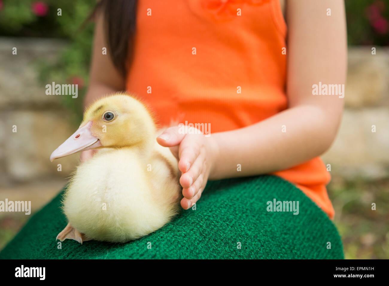 Ein Kind mit einem Entenküken auf dem Schoß. Stockbild