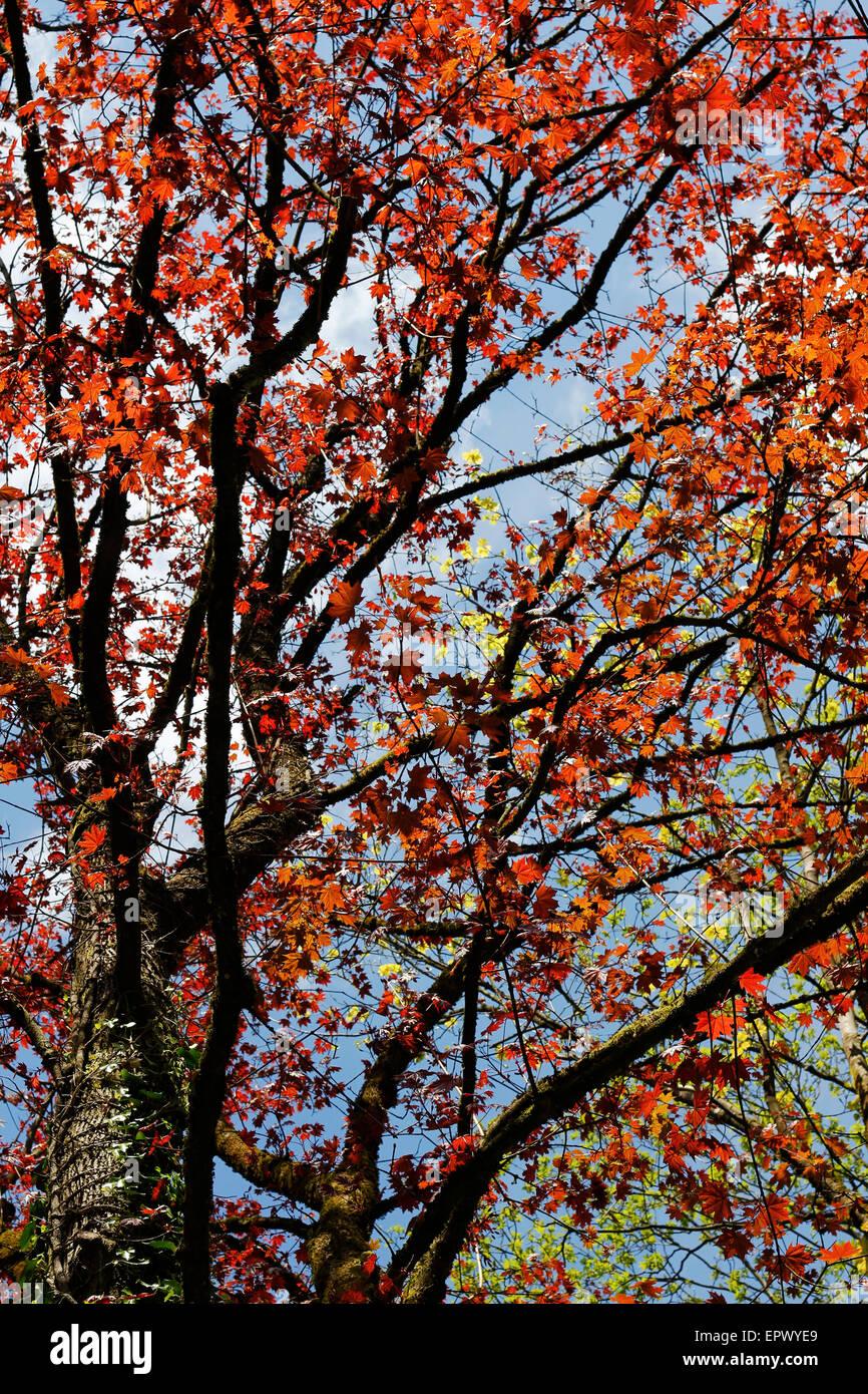 Lebendigen Farben der Natur. Stockfoto
